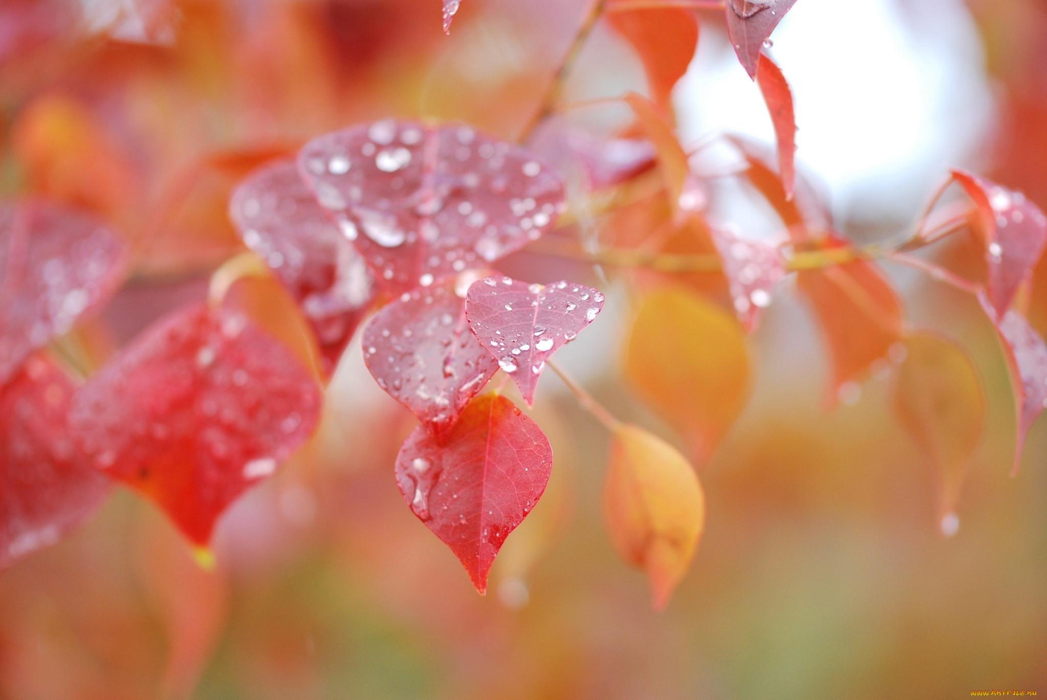 произошла обои на рабочий стол осень листья дождь вопрос интернете как
